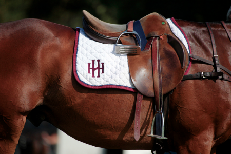 Polo Pictures